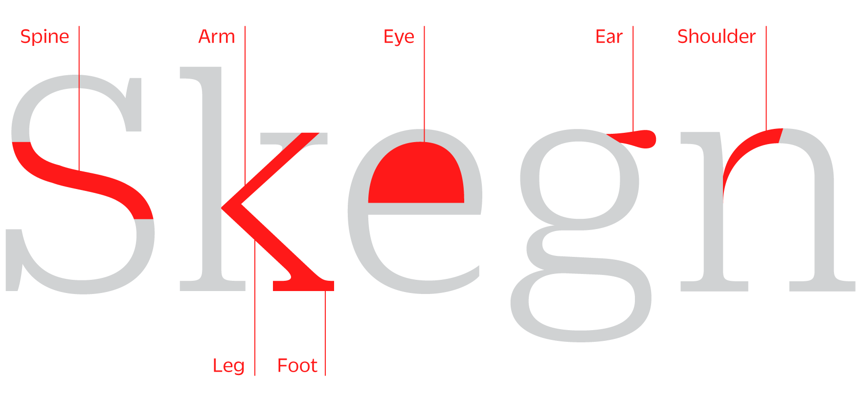Typeface anatomy diagram with commonly used terms.